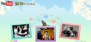 日本の人気動物動画を集めた「YouTube 動物チャンネル」