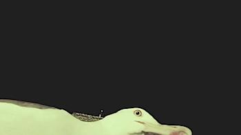 カモメがデジカメをくわえて飛んでいってしまいましたとさ、という動画