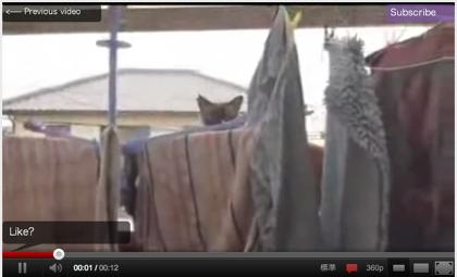 ネコも驚いて思わず「キャッ!」と言ったんじゃないかという動画(猫だけに)