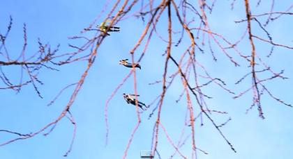 【動画】ニューヨークの街を飛ぶ人型ラジコン飛行機