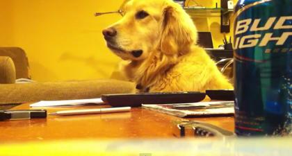 【かわいい♡】笑う犬の動画