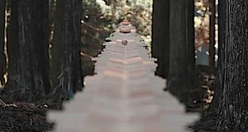 ドコモCM「森の木琴」カンヌ国際広告祭でトリプル受賞