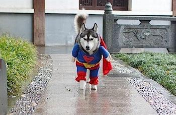 「やられた!」と思った犬のコスプレ画像