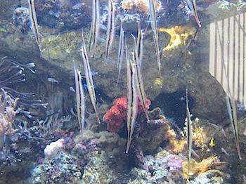 aqua_marine_fukushima_2911.JPG