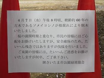bessho_sakura_201004_1566.JPG