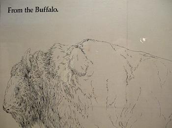 buffalo_jump_6560.JPG