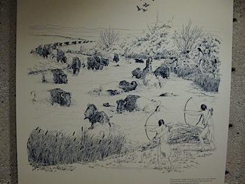 buffalo_jump_6568.JPG