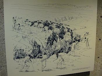 buffalo_jump_6569.JPG
