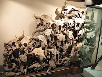 buffalo_jump_6572.JPG