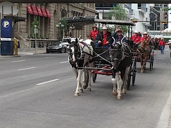 【ネタフル・カナダ支局】カルガリースタンピードの幌馬車ツアー、イーハー!