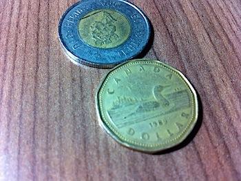 【ネタフル・カナダ支局】カナダの1ドルは通称「ルーニー(Loonie)」