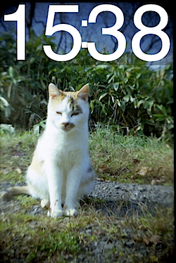 cat_too_much_01865.PNG