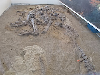dinosaur_provincial_park_6172.JPG