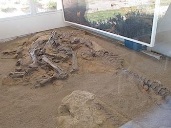 dinosaur_provincial_park_6173.JPG