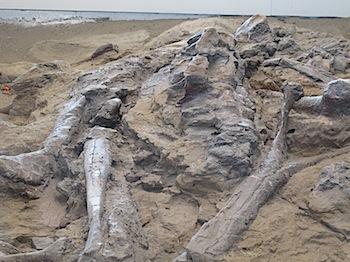 dinosaur_provincial_park_6174.JPG