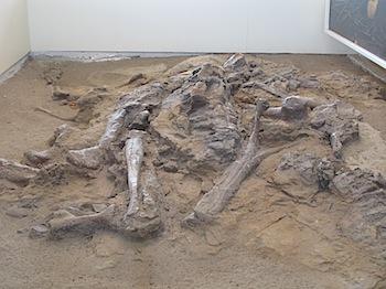 dinosaur_provincial_park_6175.JPG