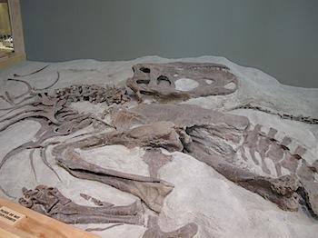 dinosaur_provincial_park_6219.JPG