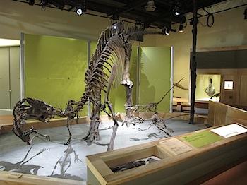 dinosaur_provincial_park_6224.JPG