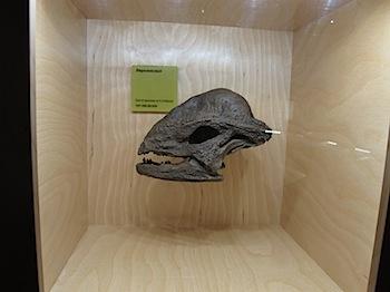 dinosaur_provincial_park_6230.JPG