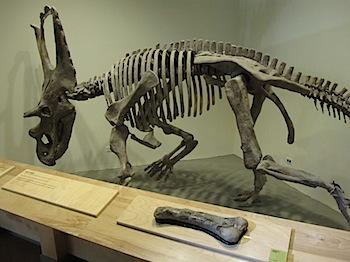dinosaur_provincial_park_6231.JPG