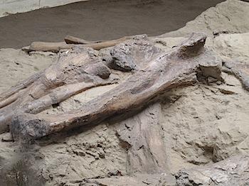dinosaur_provincial_park_6298.JPG