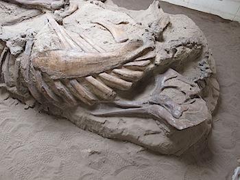 dinosaur_provincial_park_6306.JPG