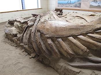 dinosaur_provincial_park_6308.JPG