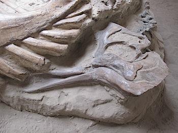 dinosaur_provincial_park_6309.JPG