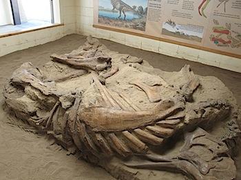 dinosaur_provincial_park_6310.JPG