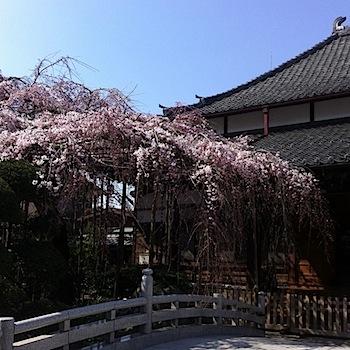 gyokuzoin_5453.JPG