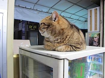 hot_cat_01273.JPG