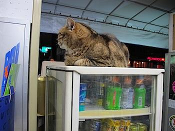 hot_cat_01274.JPG