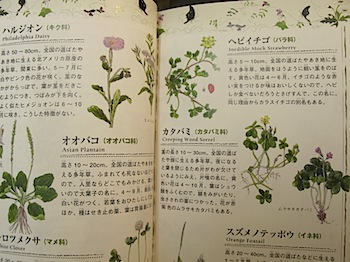 ikimono_2890.JPG