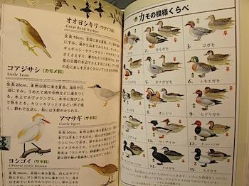 ikimono_2892.JPG