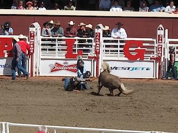 rodeo_6832.JPG