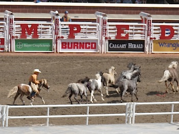 rodeo_6836.JPG