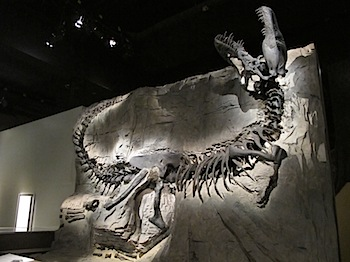 royal_tyrrell_museum_5882.JPG
