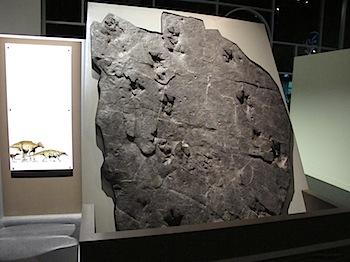 royal_tyrrell_museum_5896.JPG