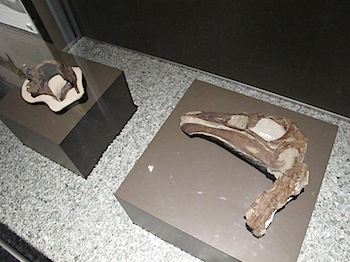 royal_tyrrell_museum_5900.JPG