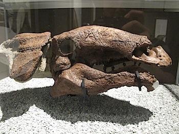 royal_tyrrell_museum_5922.JPG