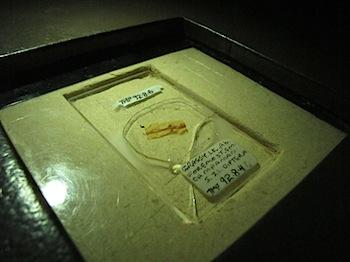 royal_tyrrell_museum_5924.JPG