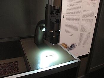 royal_tyrrell_museum_5927.JPG