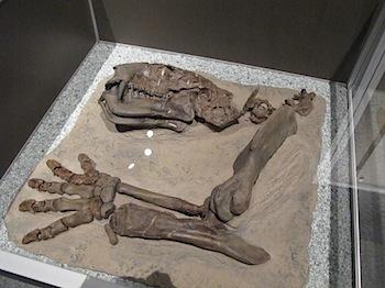 royal_tyrrell_museum_5928.JPG