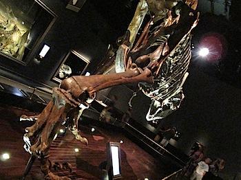 royal_tyrrell_museum_5950.JPG