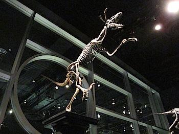 royal_tyrrell_museum_5953.JPG