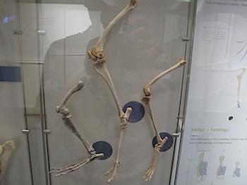 royal_tyrrell_museum_5966.JPG