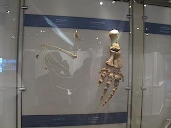 royal_tyrrell_museum_5967.JPG