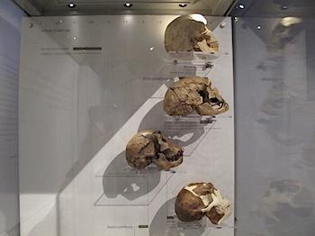 royal_tyrrell_museum_5969.JPG