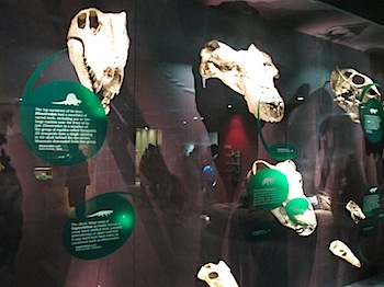 royal_tyrrell_museum_5984.JPG