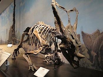 royal_tyrrell_museum_5993.JPG